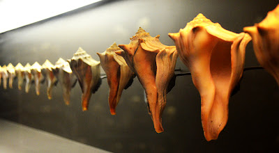 World of Shells at Fernbank Museum of Natural History
