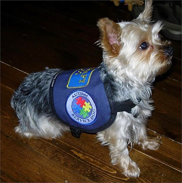 Trainers For Small Dogs For Service Dog Certification