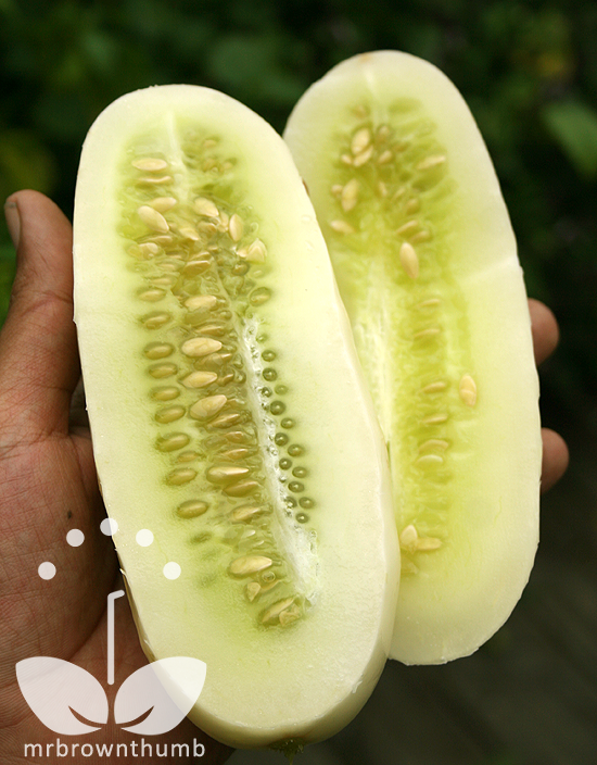 Cucumber 'White Wonder' flesh Burpee Seeds