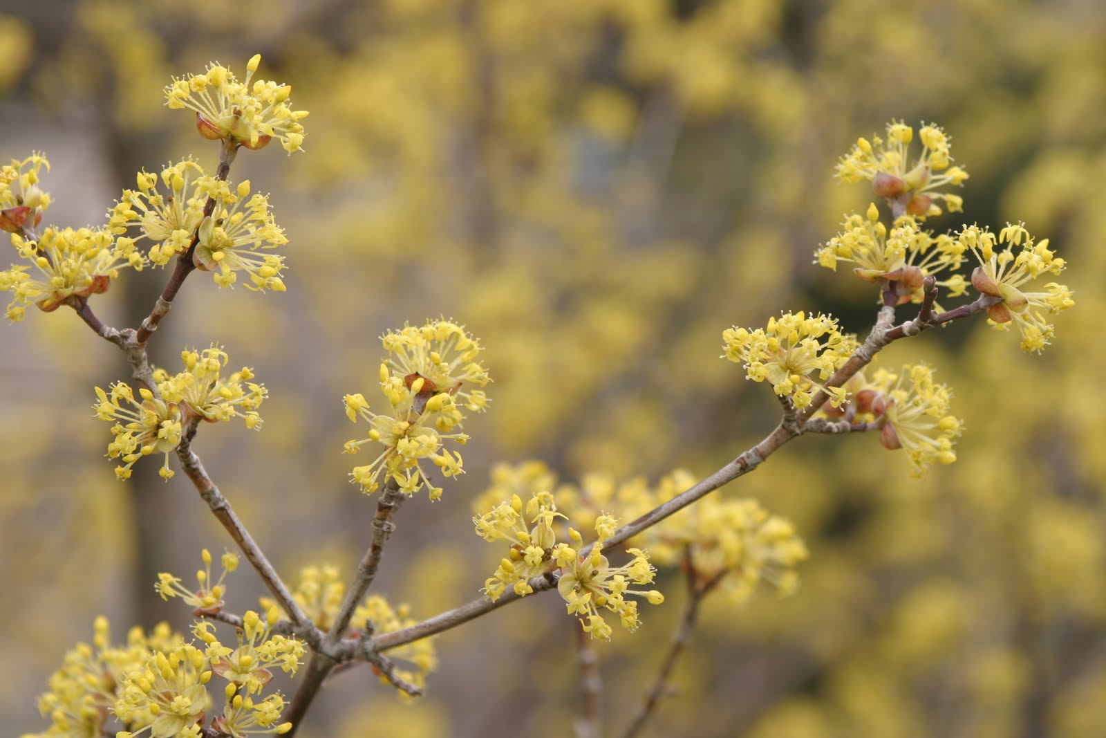 lichen and hackberry tree symbiotic relationship worksheet