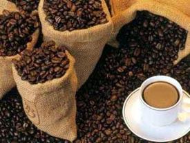 Sejarah Adanya Kopi Luwak (Civet Coffee)