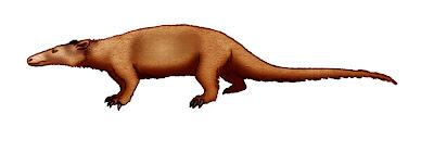 pholidota prehistoricos Metacheiromys