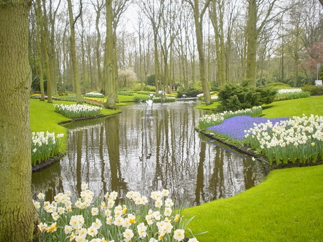 http://en.wikipedia.org/wiki/Narcissus_(plant)#/media/File:Kuekenhoff_006.jpg