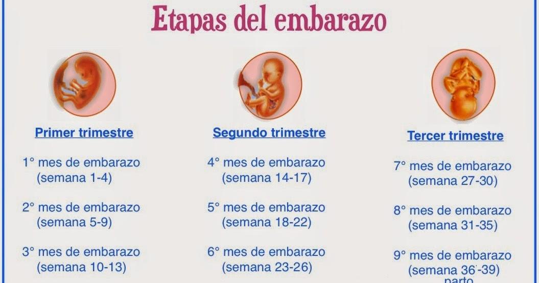 Etapas del embarazo ~ Antes, durante y despues del embarazo