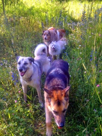 ottawa valley dog whisperer first aid kit for dogs cats