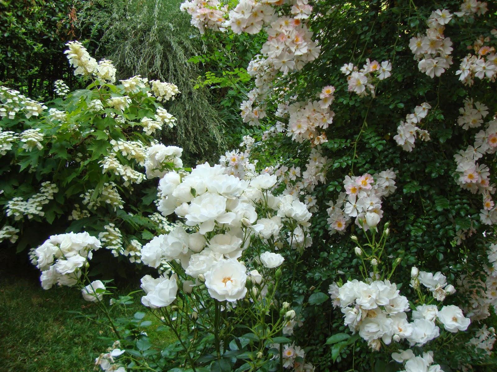 Un piccolo giardino in citt fiori bianchi perch - Fiori di giardino ...