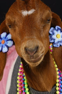 goat dressed-up