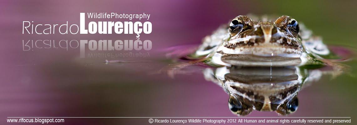 Fotografia de Natureza e Vida Selvagem - Ricardo Lourenço