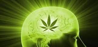 cannabis e cérebro