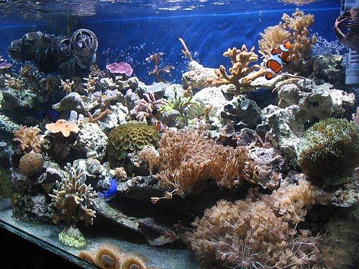 Plafoniere Hqi Per Acquario Marino : Andrea il mio reef °acquario