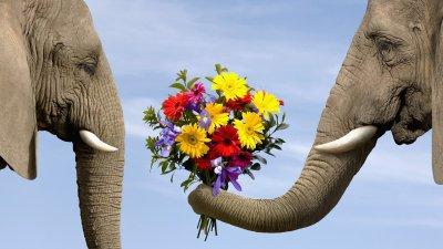 dăruind flori