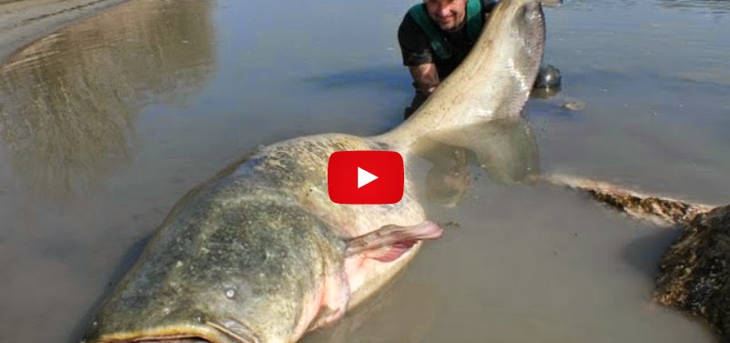 Biggest fish ever caught for What is the biggest fish ever caught