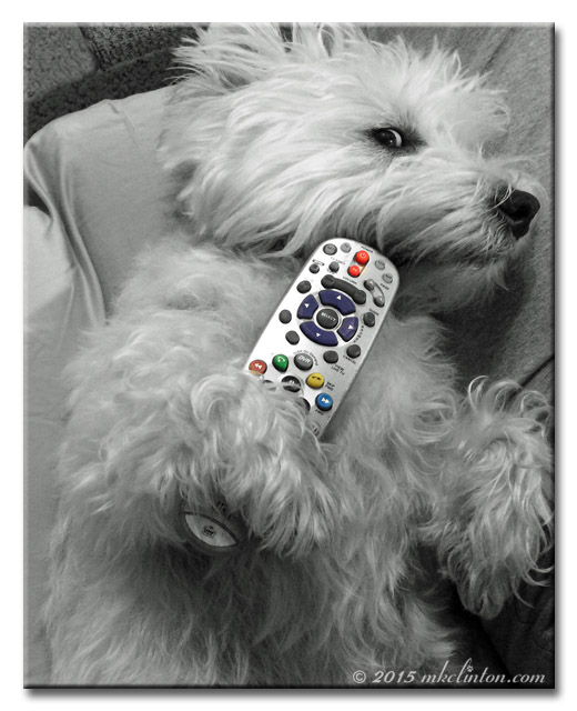 Westie dog holding television remote