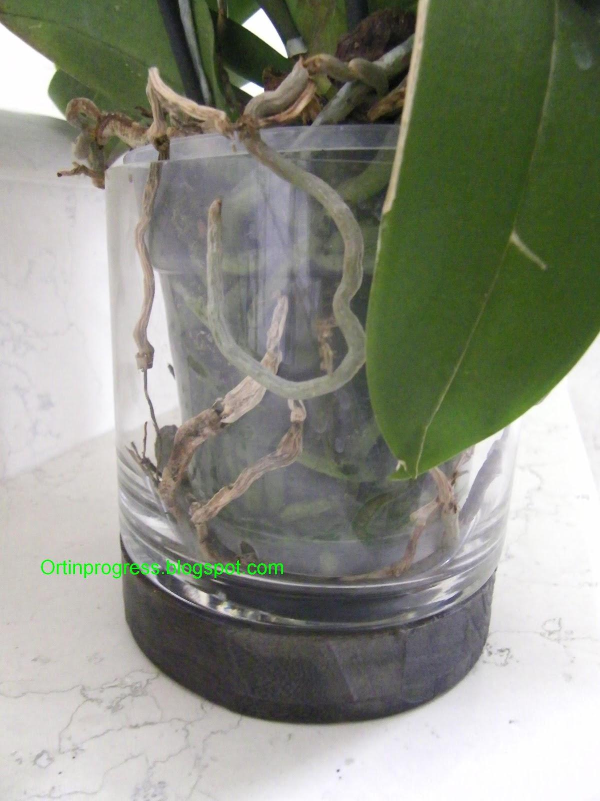 Orti in progress febbraio 2012 - Vaso in gres per orchidee ...