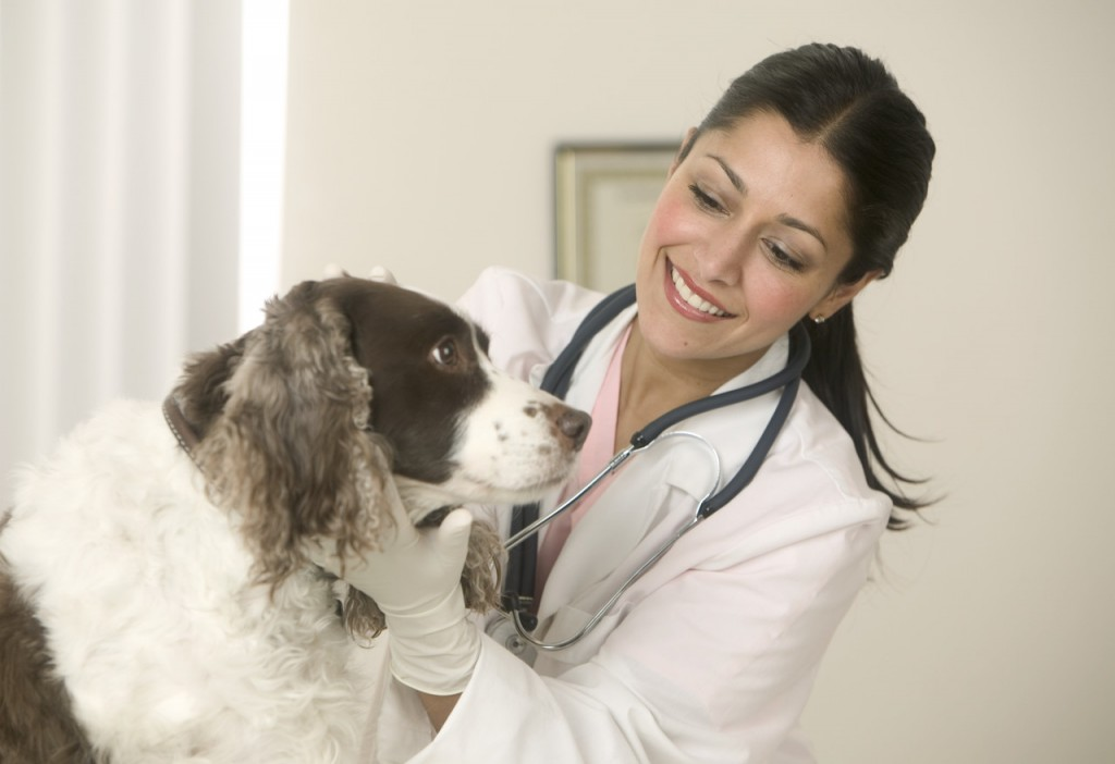 dog, Dog Health, Dogs, pet, pets,