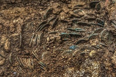 Βρήκε 4.000 ρωμαϊκά νομίσματα σε λαγούμι τυφλοπόντικα!