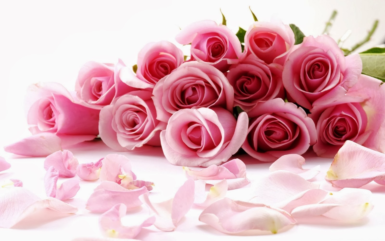 Valentines+Day+pink+Roses+wallpapers