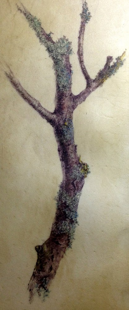 Branch with Lichens, watercolour painting on vellum