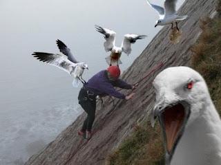 Animales ahuyentando a las personas - WTF - 3