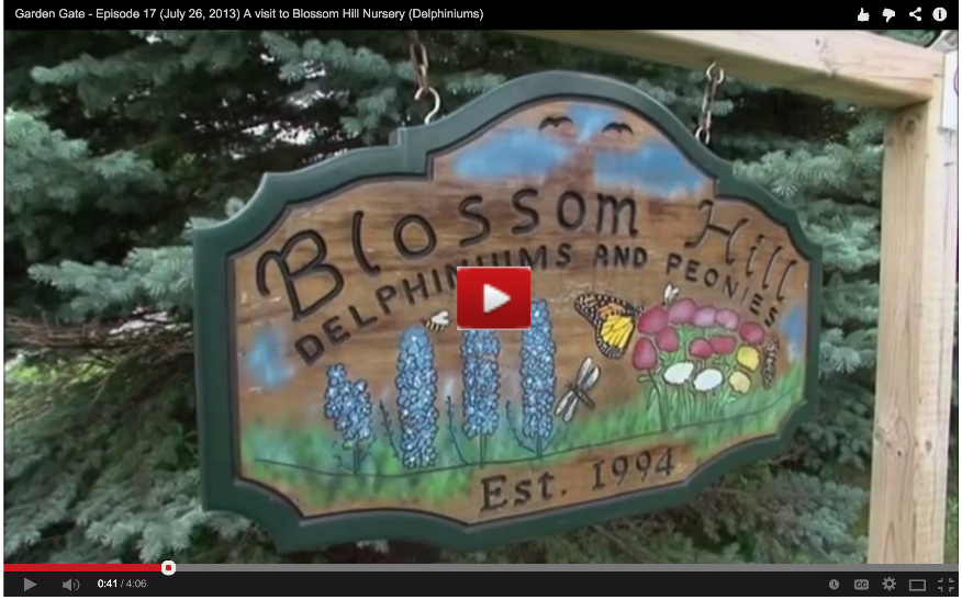 img Blossom Hill Delphiniums Youtube Screen shot Omemee Horticulture Society Welcomes Award Winning Gardner Hazel Cook to their Annual October Potluck