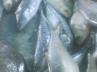 Hari Ini Makan Gulai Tenggiri - Ikan Mahal?