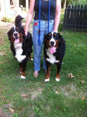 Lost Dog Rescue Foundation