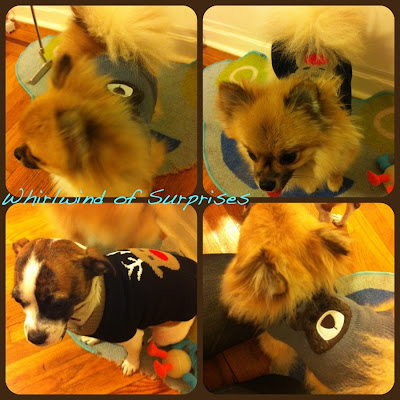 Cute dog bear, reindeer sweaters