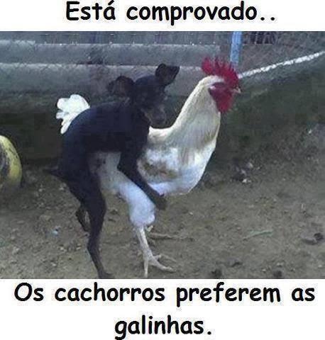 Frases Romantica E Fotos Engraçadas Cachorro Galina