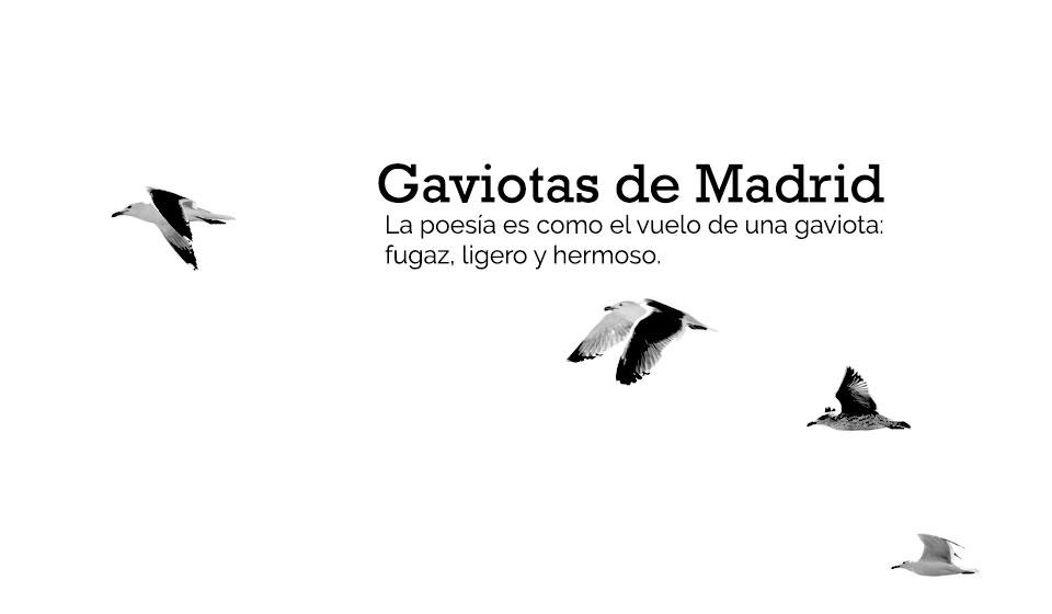 Gaviotas de Madrid