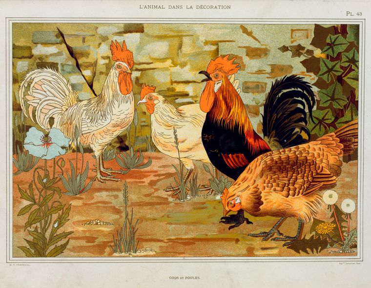 Animalarium l 39 animal dans la d coration for Poules decoration