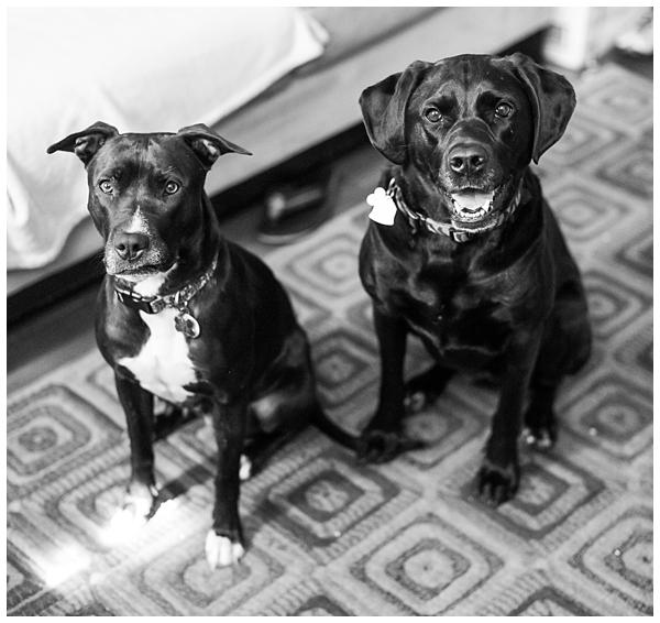 Baltimore pet photographer