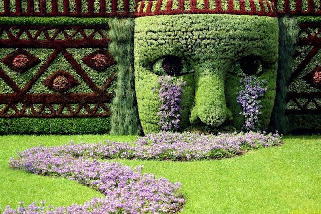 Massifs de plantes originales