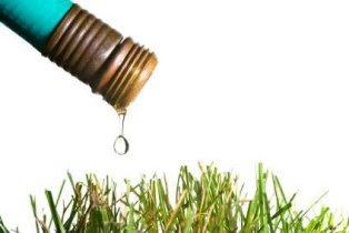 Piscine et jardin que faire en cas de restriction d eau - Que faire en cas de coupure d eau ...