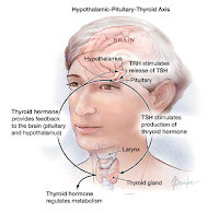 Hypothyroidism Natural Treatment In Tamil