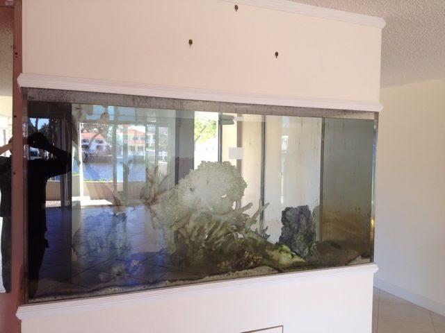 Giant aquariums 300 gallon custom fish tank aquarium for Craigslist fish tank