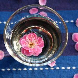 Pfluamenblüte