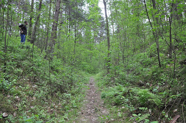 """Las """"zabliźnił rany"""" po kamieniołomie w okolicach Rogowa. Pozostał sztuczny wąwóz (prawie 10 metrów wysoki). Foto. KW."""