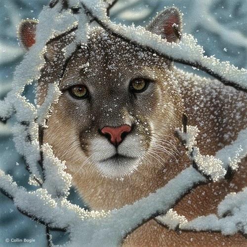02-Cougar-Collin-Bogle-Animal-Wildlife-in-Art-www-designstack-co