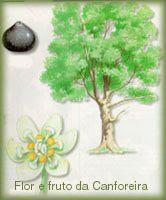 Terapias Alternativas, Oleos terapeuticos, Plantas, árvores e frutos Medicinais