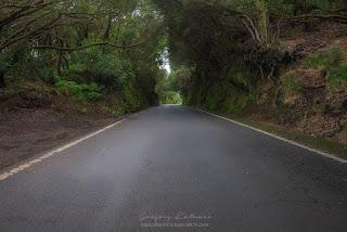 Тоннель из деревьев, нависающих над дорогой в горах Анага