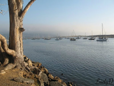 many boats in morro bay