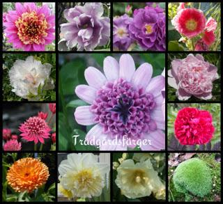 Blomsterfärger
