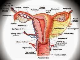 Solusi Tepat untuk Mengobati Kanker Mulut Rahim