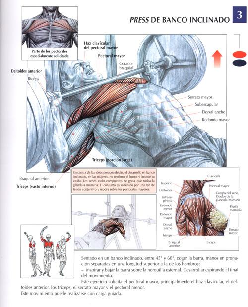 Los máses y el menos implantov para el pecho