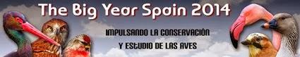 Spain A-1