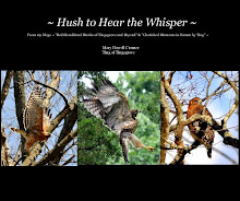 ~ Hush to Hear the Whisper ~