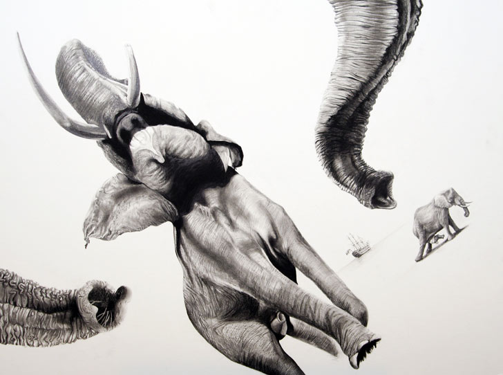 Animal drawings in pencil