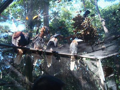 big birds in Zoobic Safari