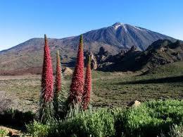 Volcán del TEIDE - TENERIFE