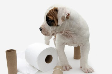 Dog Eats Toilet Paper Roll